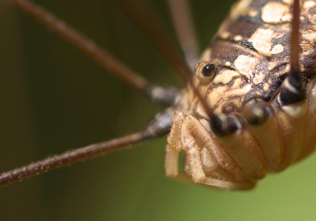spider767.jpg